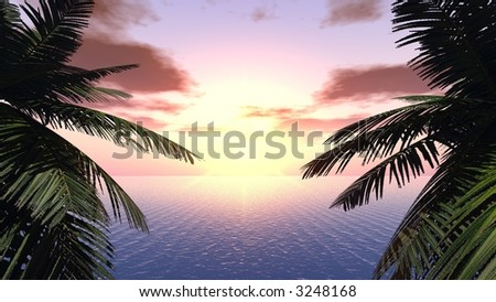 Sunset on a background of branches of palm trees - stock photo