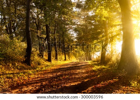 Sunset on a forest path in autumn scenery