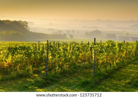 Sunset on a vineyard - stock photo