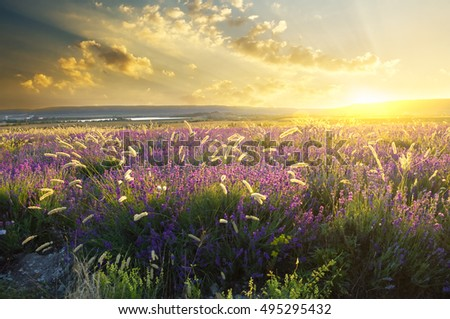 sunset on summer mountain meadow. Nature composition.