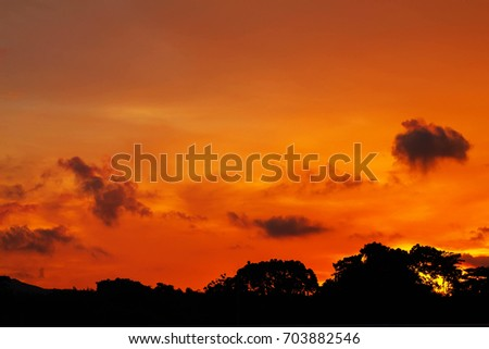 sunset on trees with soft focus