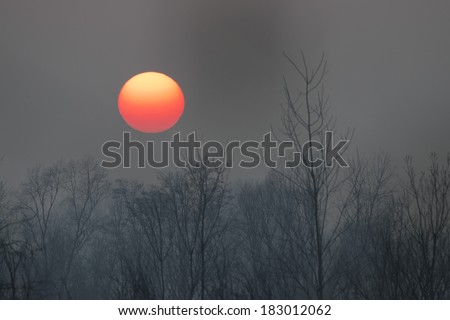 sunset orange ball sun on forest background in winter time