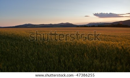 Sunset over a cornfield