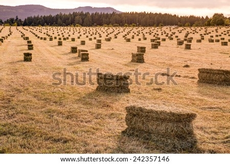 sunset over a cut farm field with hay bails - stock photo