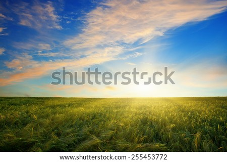 Sunset over a field