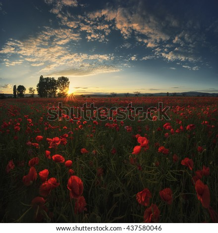 Sunset over a field of red poppies with clouds in bright evening light. Landscape in Bulgaria - stock photo