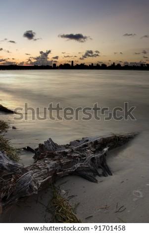 Sunset over beach, driftwood, and Miami skyline - stock photo