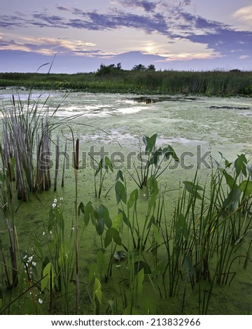 Sunset over Crooked Slough on a summer evening at Sprinbrook Prairie Nature Preserve, DuPage County, Illinois. - stock photo