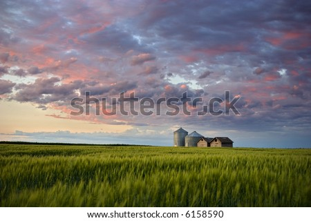 Sunset over farm buildings and wheat swaying gently in the evening breeze, Gilbert Plains, Manitoba, Canada - stock photo