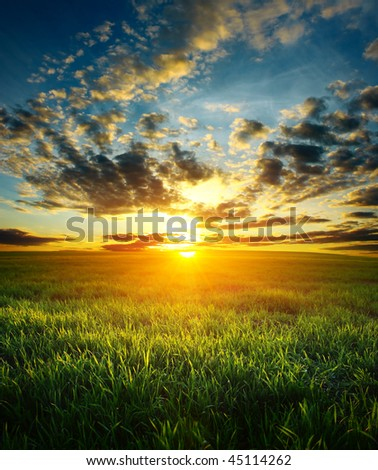 Sunset over field with green grass - stock photo