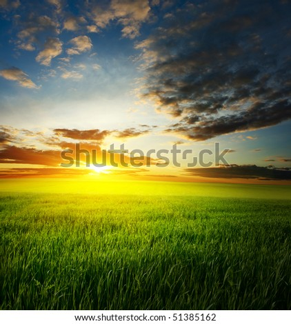 Sunset over field with green grass