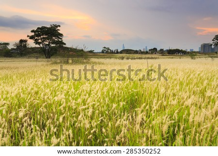 Sunset over grassland - stock photo