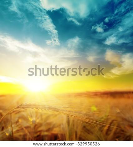 sunset over harvest field - stock photo