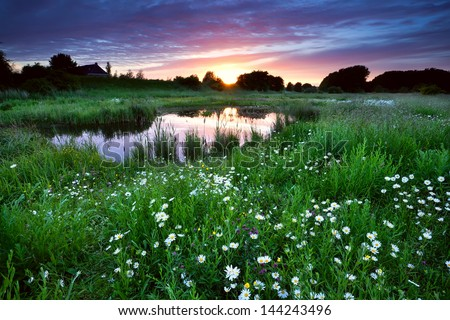 sunset over meadow with many daisy flowers and lake - stock photo