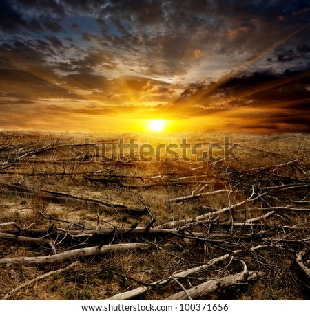 sunset over old dead trees on meadow - stock photo