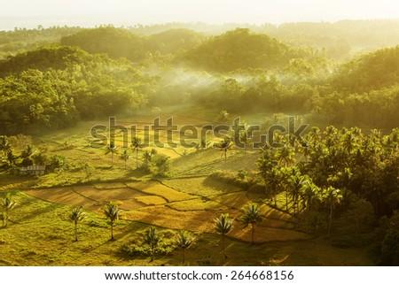 Sunset over rice field near Chocolate hills. - stock photo