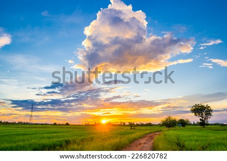 sunset over rice fields, Thailand. - stock photo