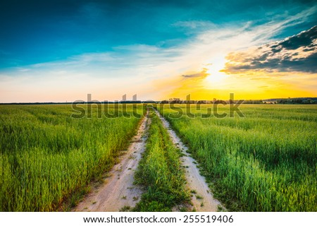 Sunset over rural dirty  countryside road in green wheat field. Summer meadow, sunrise instant toned photo - stock photo