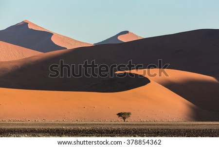 Sunset over sand dunes and one tree in Sossusvlei in Namibia - stock photo