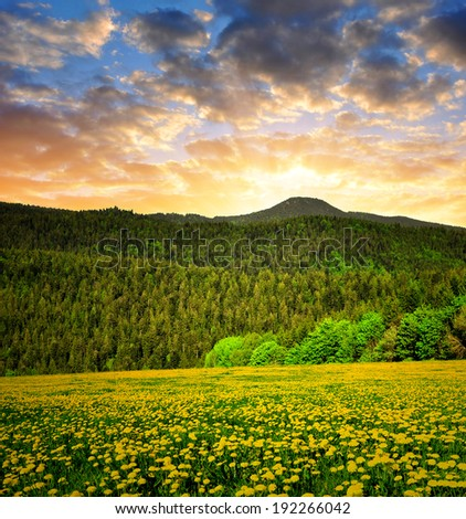 Sunset over the Bavarian Forest National Park - Germany