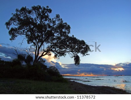 Sunset over the Chobe river with silhouetted tree, Chobe National Park, Botswana - stock photo
