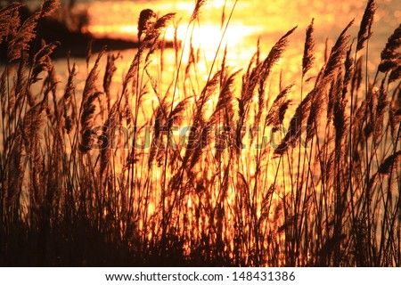 sunset over the marshes of the delta - stock photo