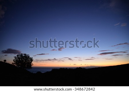 sunset over the pacific with tree silhouette - stock photo