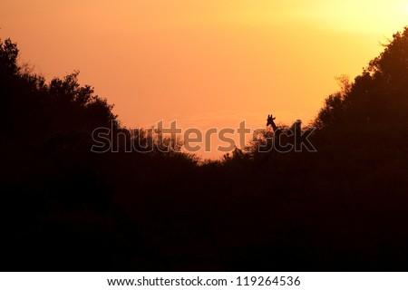 Sunset over trees in Kenya - stock photo