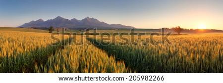 Sunset over wheat field with path in Slovakia Tatra mountain - panorama - stock photo