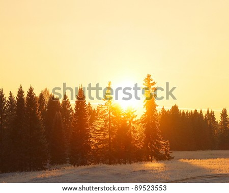 Sunset over winter forest with pine trees - stock photo