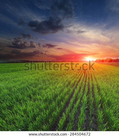Sunset over young green sprouts on crop field - stock photo