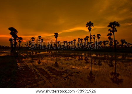 Sunset Paddy in thailand
