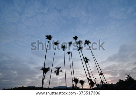 sunset Palm tree rows - stock photo