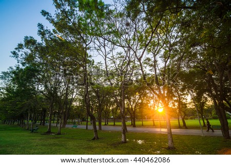 Sunset scence with yellow beam in the green central public park landscape