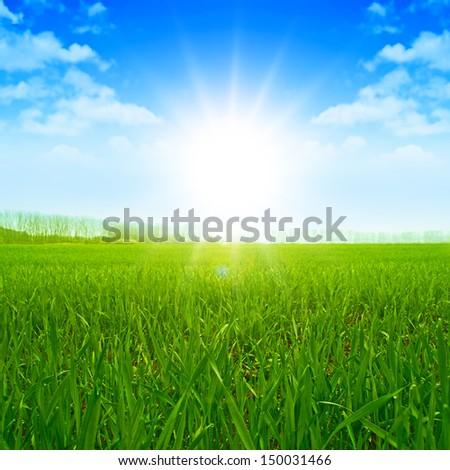 Sunset Sky Grass Field Meadow Shine - stock photo