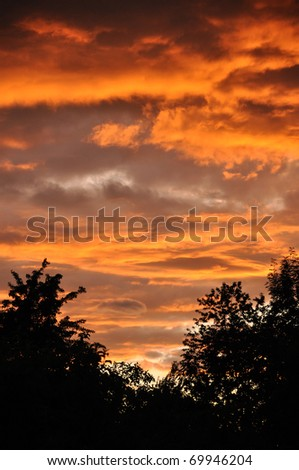Sunset sky over forest