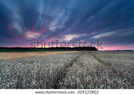 sunset sky over wheat field in summer