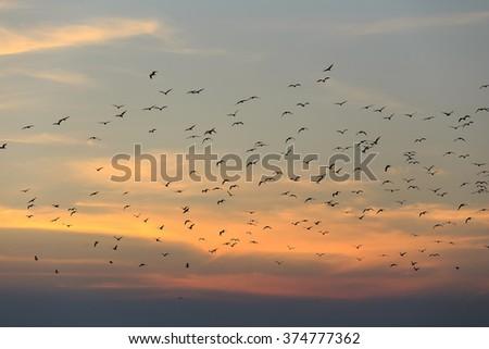 Sunset sky whit birds. - stock photo