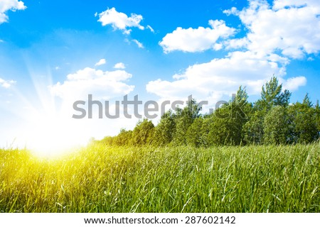 Sunset sun and field of green fresh grass - stock photo