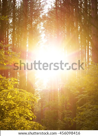 Sunset Sunbeams. Lane Running Through The summer Deciduous Forest At Dawn Or Sunrise. - stock photo