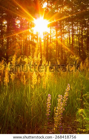 Sunset Sunlight In Green Forest, Summer Nature - stock photo