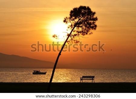 Sunset, Sunlight, Sunset Sky, Sunset Sea, Sunset Tree, Sunset Bird, Bench, Sunset Bench, Boat, Sunset Boat - stock photo