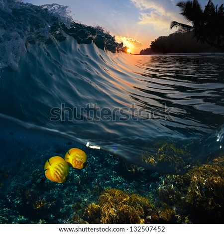 sunset time green blue colored ocean surfing wave splitted by waterline and tropical yellow fish - stock photo