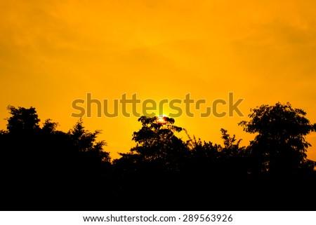 Sunset tree silhouette - stock photo