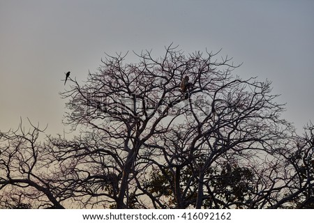 sunset tree with monkey and a parrot