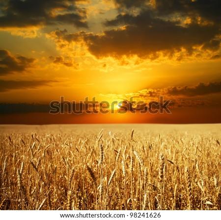 Sunset Wheat Field - stock photo