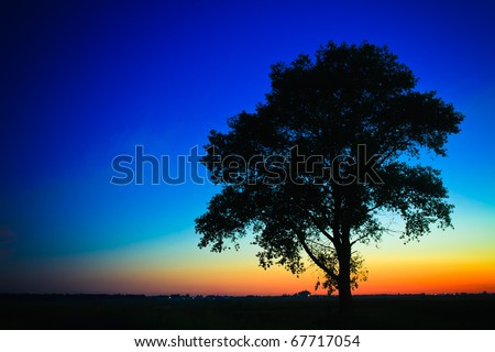 Sunset with a silhouette of a lonely tree - stock photo