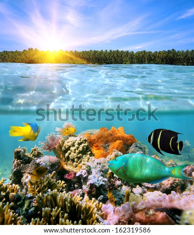 Sunset with coconut trees on horizon and underwater colorful marine life split by waterline - stock photo