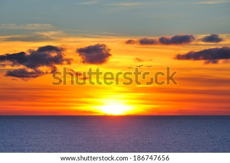 Sunset with few gulls over sun - stock photo