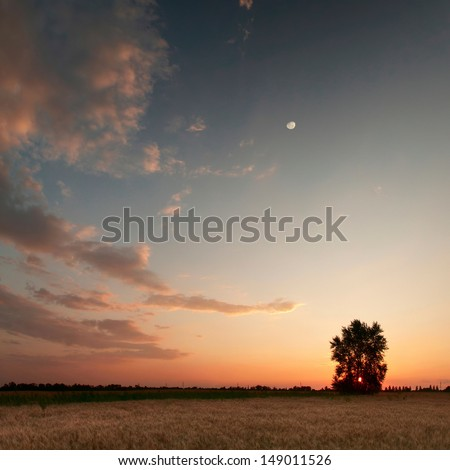 Sunset with moon and clouds sky in a wheat field with lonely tree - stock photo